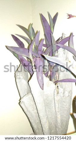 flora and flora pot  #1217554420