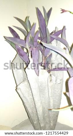 flora and flora pot  #1217554429