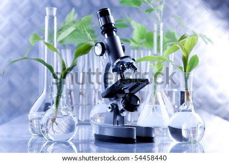 Flora experiments in laboratory, making research with plants