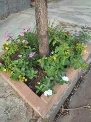 Flora nature cor flores natureza