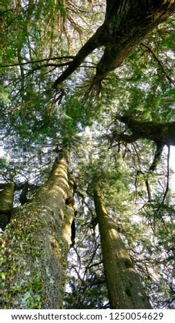 Flora of New Zealand #1250054629