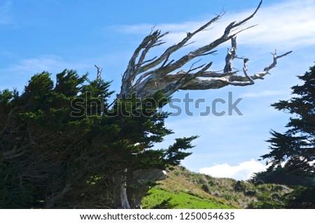 Flora of New Zealand #1250054635