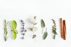 Floral and herbal sprigs of lavender, thyme, mint leaves and cinnamon, flat lay on neutral background. Ingredients for essential oils