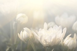 Floral background blooming in pastel tones. Colorful flowers in the summer for graphic design or wallpaper.
