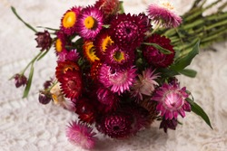 Floral background. Bouquet of pink and red flowers of Xerochrysum bracteatum (Helichrysum bracteatum), close-up. Background, dry straw flowers