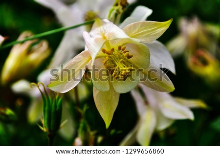 Floral background. Floral frame made of white flowers and green leaves isolated on wood background. Flat lay, top view. #1299656860
