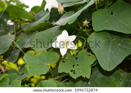 Floral background. Floral frame made of white flowers and green leaves isolated. Top view. #1096732874