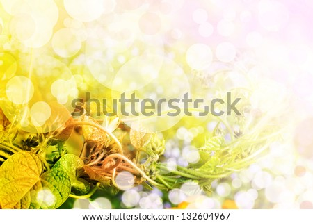 floral background in summer time/ Spring background, bright blur colors