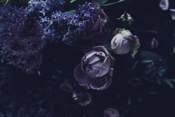 Floral background in trendy violet and lilac colors with faded effect. Purple roses and lilac on dark background, closeup. Design of floral card or signboard, selective focus