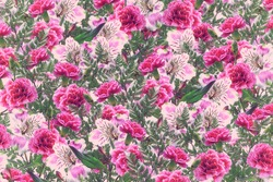 Floral background of bright colorful flowers alstroemeria and carnations.