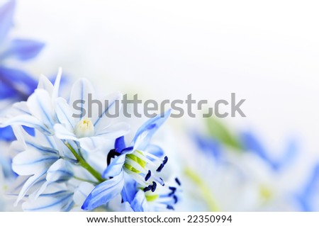 Floral background of first spring flowers close up