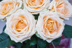 Floral background of pink fragrant roses. Beautiful pink roses are blooming. Macro bouquet of pink roses.