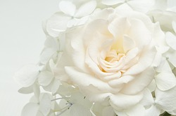 floral background of white flowers