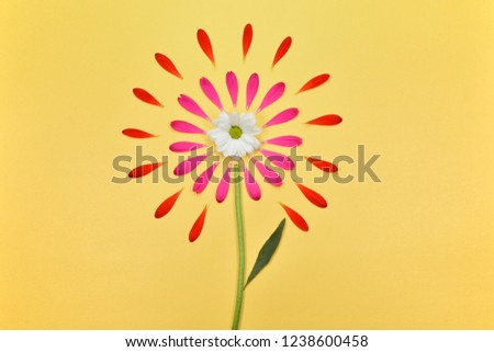 Floral background. Spring floral background with space for text. Beautiful flowers. Pink petals on a yellow background. Flower petals and daisies. #1238600458