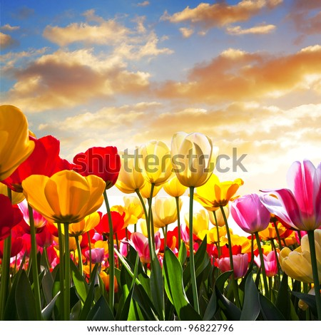 Floral Background. Sunset. Landscape.
