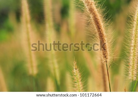 floral background, the theme of grass with flowers