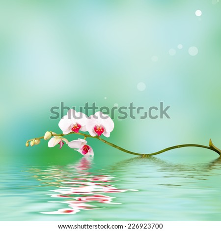 Floral background: white orchid flowers over a backdrop along with reflections in wavy water surface