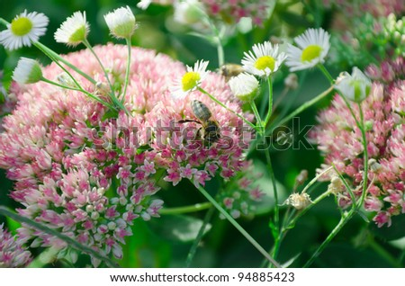 floral background with a high degree of blur