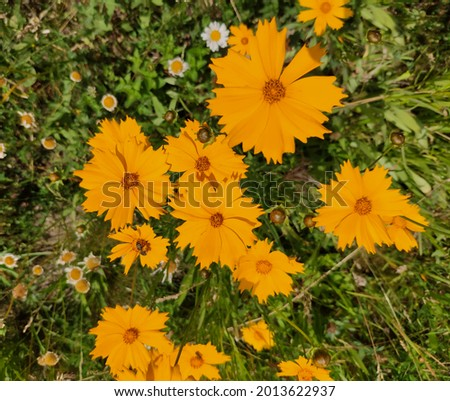 Floral background with bright yellow daisies on natural background. Rudbeckia - Sun lumps in a summer garden. Stock fotó ©