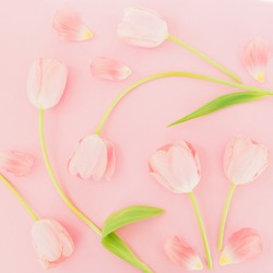 Floral background with tulips flowers on pink pastel background. Flat lay, top view. Spring time background.