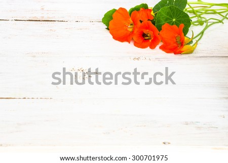 Floral backgrounds with flowers of nasturtium arranged on white wood useful as greeting card, mothers day card or invitations card