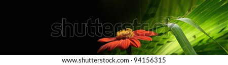 Floral banner for your design on black background. Horizontal banner with photo elements - green leaf and red flower.