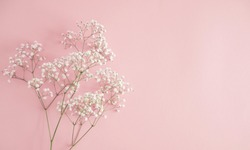 Floral beautiful pastel pink background. White small flowers. Flowers Gypsophila. Flat lay, top view, copy space