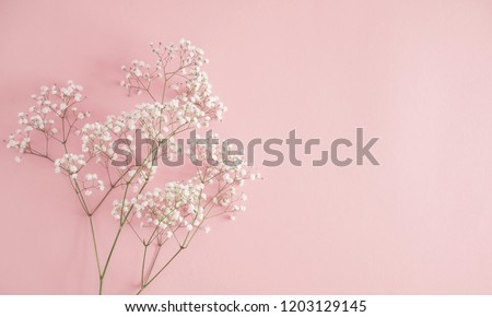 Floral beautiful pastel pink background. White small flowers. Flowers Gypsophila. Flat lay, top view, copy space  #1203129145