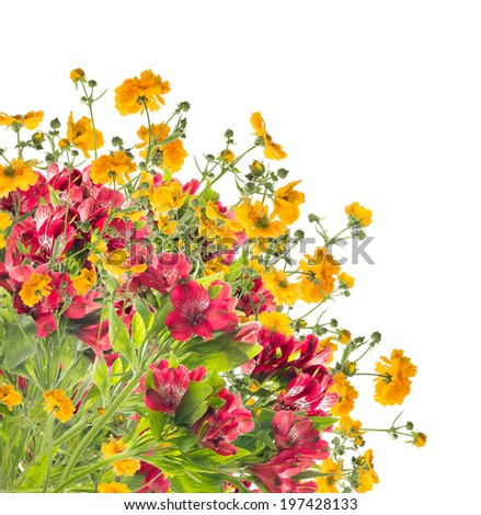 Floral border of yellow and red flowers,isolated on white background