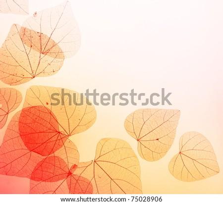 Floral Border with Autumn Orange and Red Leaves