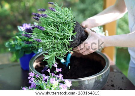 Floral composition.Female plants in pot plants forming a beautiful composition flower #283164815