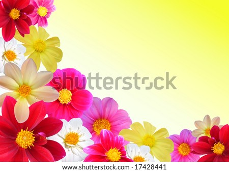 Floral composition of different colours dahlia. Orange colour background, AAA