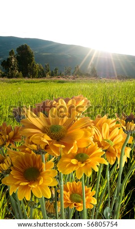 Floral field and sunset