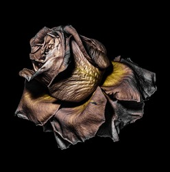 Floral fine art color macro of a single isolated  aged fading golden and brown rose blossom with metallic detailed texture on black background in vintage surreal painting style, fantastic realism