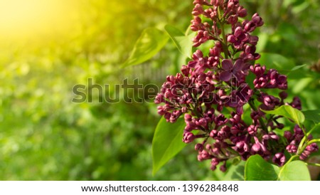 Floral floral background. Green background with flowers. #1396284848