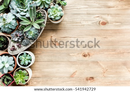 floral frame with succulents minimal creative berry arrangement pattern on wooden background. flat lay, top view. christmas background wallpaper.