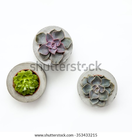Floral hipster pattern over white background. Three Succulents in concrete pots.