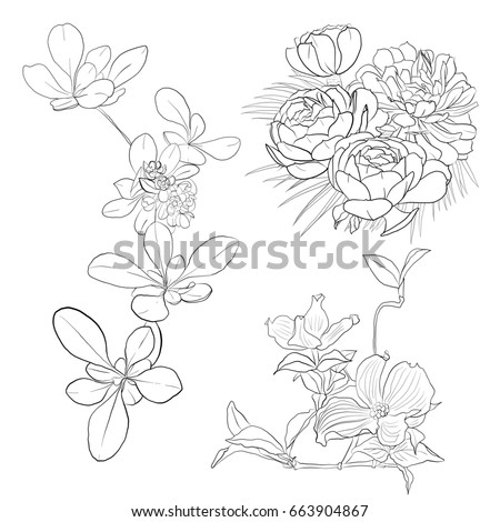 floral leaves and blooms illustration, hand drawing, white backgground and black lines #663904867