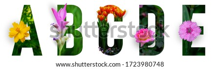 Photo of Floral letters. The letters A, B, C, D, E are made from colorful flower photos. A collection of wonderful flora letters for unique spring decorations and various creation ideas. clipping path