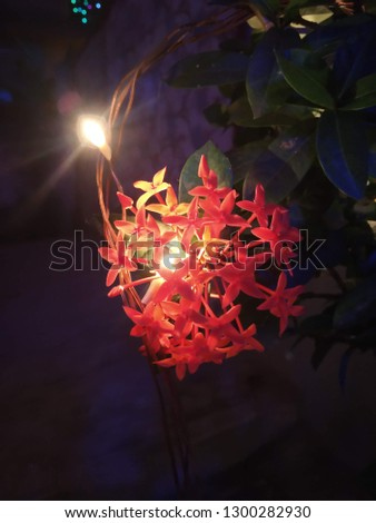 floral light decoration, festive decoration.