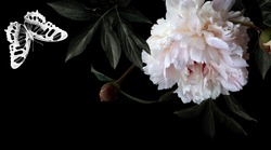 Floral modern card. Photo white flowers peonies and drawing butterfly on black background. Template for design wedding invitations, greetings, business card, decoration packaging, banner poster