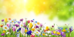 Floral nature spring background with green backdrop. Different wild beautiful flowers