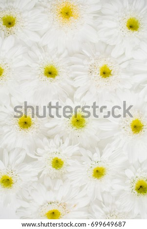 Floral pattern made of white chamomile daisy flowers. Flat lay, top view. Floral background. Pattern of flower buds.