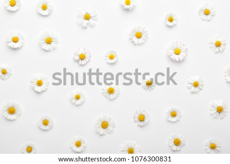 Floral pattern made of white chamomile daisy flowers on white background. Flat lay, top view. Daisy background. #1076300831