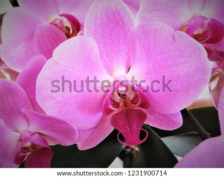 floral pink orchids #1231900714