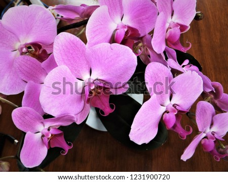 floral pink orchids #1231900720