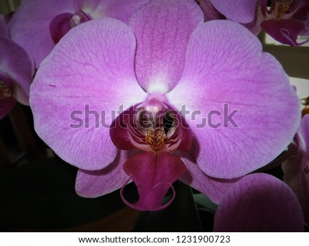 floral pink orchids #1231900723