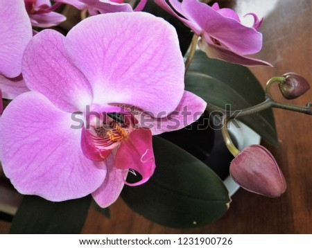 floral pink orchids #1231900726