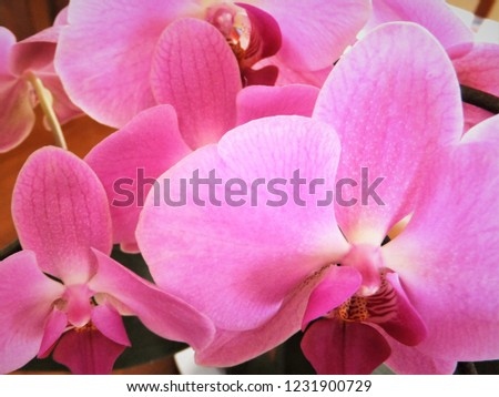floral pink orchids #1231900729