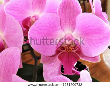 floral pink orchids #1231900732